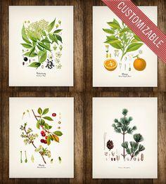 Four Flower & Fruit Vintage Botanical Prints | Art Prints | Printed Vintage | Scoutmob Shoppe | Product Detail