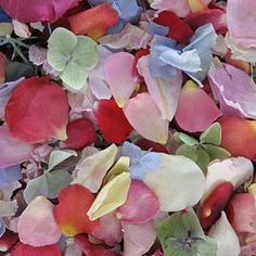 When bouquets and arrangements of wedding flowers don't quite cut it, add rose petals! Freeze dried rose petals have grown in popularity over the past 5 years largely due to their longevity and ease of care. Available in many different colors, these rose petals are affordable and easy decorations for weddings and events alike! Visit GrowersBox.com for more information.