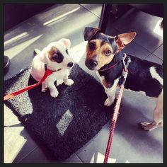 """#blijehond: """"Ja maar....Hij zit op mijn kleedje!!!"""" Voor het eerst zaterdag-ochtend-koffie met de hele 'familie'... ;-) #puppyspam"""
