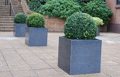 Cube 600 planters with Buxus planting, defining the visual centre line of the terrace
