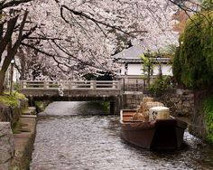 一之船入と桜 / Ichinohunairi Cherry Blossoms by Active-U, via Flickr
