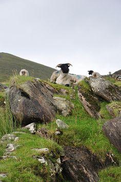 Achill Island by Fergal of Claddagh, via Flickr