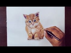 ▶ Drawing Animals 1 - Drawing a kitty - prismacolor pencils - YouTube