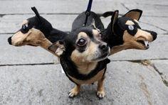 Die 20 Besten Bilder Von Kostume Fur Den Hund Mascot Costumes