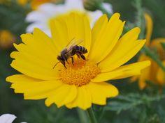 Bee :D