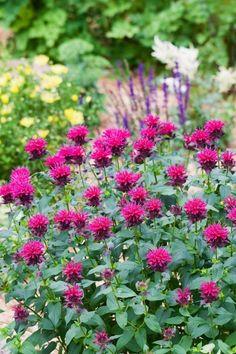 Garden herbs that bloom beautifully and taste good - Garten - Blumen & Pflanzen Amazing Gardens, Beautiful Gardens, Beautiful Flowers, Elegant Flowers, Herb Garden Design, Vegetable Garden Design, Bloom, Flower Landscape, Garden Planning