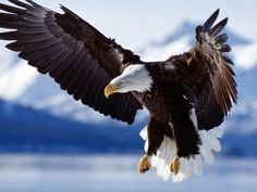 I got: Eagle! Just & Honorable, you are the Eagle! You hold yourself to the highest of moral standards, and expect the same in every other person you meet. Despite this, you tend to be a good judge of character. Your honest nature and cunning work ethic make you a force to be reckoned with, and a strong leader. What Type of Bird Are You?