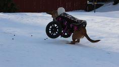 Willa showing off just how light her Eddie's Wheel cart is.