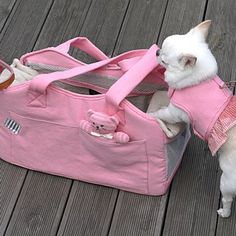 Pink Organic Shoulder Bag (Petit): The Organic Shoulder Bag from Louisdag features organic Oxford fabric, great for sensitive skin! This bag has multi Cute Chihuahua, Teacup Chihuahua, Pomeranian, Yorkie, Aggressive Dog, Dog Costumes, Dog Behavior, Dog Supplies, Dog Accessories