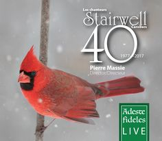 The BEST Christmas Carol Music CDS and MP3s are right here! Quality choral music recordings by Ottawa's Award winning choir, The Stairwell Carollers. Net proceeds to Charity. New CD for 2017.