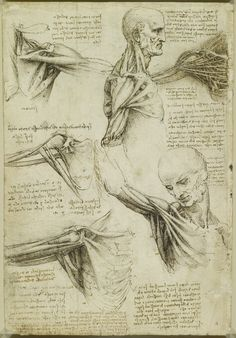 Billedresultat for Leonardo da Vinci: 'The Anatomy of the Shoulder and Neck', cirka Salvador Dali, Leonardo Da Vinci Zeichnungen, Moleskine, Mirror Writing, Equestrian Statue, Body Map, Drawing For Beginners, Beginner Drawing, Anatomy Drawing