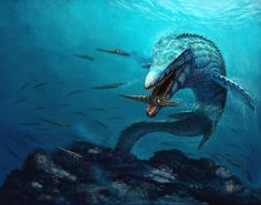 Mosasaur.....this is what I always fear is directly under my feet when I swim in a lake :)