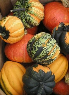 Decorate with the gourds we GREW this summer! Bountiful Harvest, Fall Harvest, Fruit And Veg, Fruits And Veggies, Autumn Day, Autumn Leaves, Winter, Pumpkin Squash, Acorn Squash