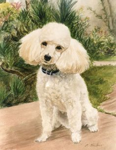 Poodle In Garden Giclee Print by PTarlowArt on Etsy, $16.00