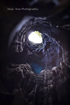 The view from inside a Cedar Tree by Misa-Rae Photography