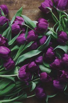 <>*<>* Purple Tulips, Purple Love, All Things Purple, Deep Purple, My Flower, Beautiful Flowers, Beautiful Gorgeous, Bouquet, Ikebana