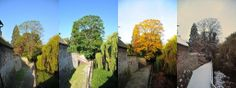 One tree,four seasons. At the Archbishops Palace in Maidstone