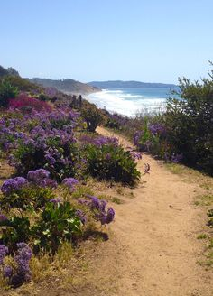 favorite places to walk.on the cliffs above the beach in Del Mar near San Diego. The Places Youll Go, Places To See, Champs, San Diego Travel, San Diego Living, San Diego Beach, Costa, California Dreamin', Adventure Is Out There