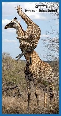 Funny Animal Pictures to Get You out of A Bad Day! funny-animal-quotes-pictures Get more photo about subject related with by looking at photos gallery at… - Tierischer Humor, Humor Quotes, Humor Books, Cartoon Quotes, Girl Humor, Baby Animals, Cute Animals, Nature Animals, Smiling Animals