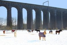 Horses under the viaduct in Welwyn, Herts- Ava loves going to see those horses Beautiful Places To Visit, Cool Places To Visit, England And Scotland, Great Britain, Old Photos, Ava, Countryside, The Good Place, Ireland