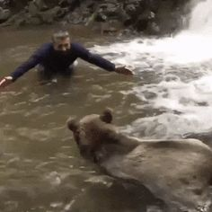 """Fotos de Coleccion: Fotos de coleccion: """"Jugando con un oso en el agua..."""