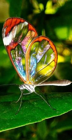 "This butterfly doesn't even look real !!!cf. It's so beautiful and different❤""UNIQUE"" !!!"