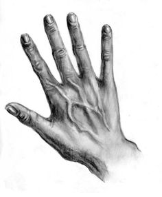 Auf folgende Seite erkennen Sie, wie kann man eine Hand realistisch zeichnen. Die Anleitung ist auch dabei. Schauen Sie mal selber.