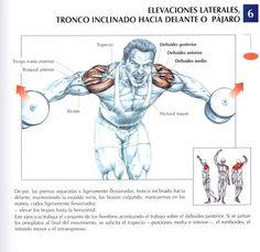 elevaciones-laterales-tronco-inclinado-hacia-delante-o-pajaro | por Deporte sin Quimica