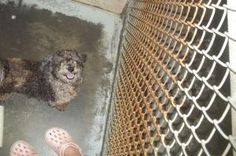 Willow is an adoptable Poodle Dog in Johnson City, TN. Female dogs are 95.00. Male dogs are 80.00. This pays for their spay or neuter. If they are already spayed or neutered, they are only 35.00! For ...