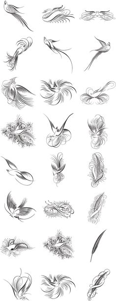 A Useful Roundup of Free Calligraphy Vectors - StarSunflower Studio