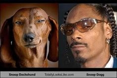 """Ran across this while looking for images for """"Ugly Dachshund"""". Made me giggle."""