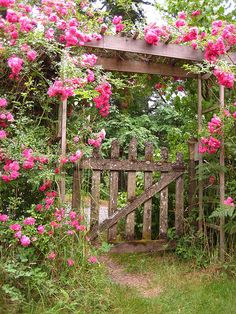 Trellis with old gate covered with pink climbing rose.Love it!