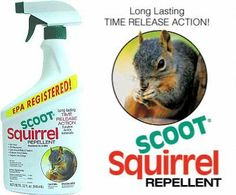 1000 Images About My Nemesis The Grey Squirrel On Pinterest Squirrel Proof Bird Feeders