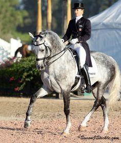 Lusitano horse.. dressage