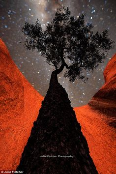 Red Centre: When she first left the city life Fletcher spent three months in the centre of Australia capturing sensational images of Ayers rock in the Northern Territory such as Nightscape (left) and Blue Tears and Bloodwoods (right)