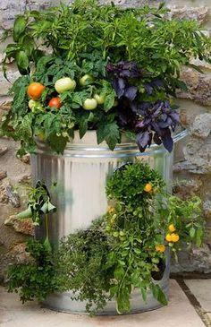 Garden in a trashbin :-)
