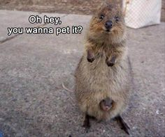 funny-animals-12-8 funny animal pictures pictures funny Animals