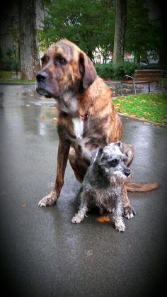 El tamaño no importa para la amistad
