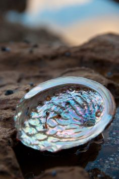 ocean's neutral: abalone shell.