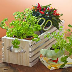 Decorative Herb Crate Spice up your decor with a wooden tabletop crate that holds three pots of your favorite herbs. Container Gardening, Gardening Tips, Flower Boxes, Flowers, Herb Planters, Edible Garden, Do It Yourself Home, Kraut, Herb Garden