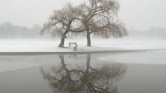 fog park winter free download hd wallpapers