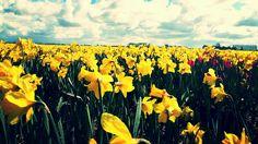 Flowers yellow sky