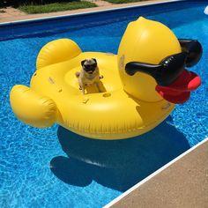 I'm a sucker for a cool pool floatie - Doug the Pug