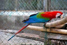 Macaw by salim