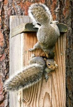 "='ᴥ'= Squirrel Sez: ""This place needs another door!""                                                                                                                                                     More"