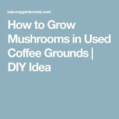 How to Grow Mushrooms in Used Coffee Grounds | DIY Idea