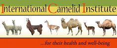 Camelid Articles & Publications | International Camelid Institute