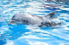 New baby dolphin at SeaWorld Orlando