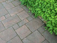 Stepping Stones, Sidewalk, Outdoor Decor, Home Decor, Stair Risers, Interior Design, Home Interior Design, Pavement, Curb Appeal