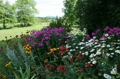 Love!  Tall Phlox blooms with Shasta Daisies, red Bee Balm/Monarda (another absolute favorite of hummingbirds) and Gloriosa Daisies/Rudbeckia hirta (Black-eyed Susans)